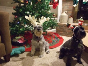 Merry Christmas from our dogs - you would not believe how long we worked to get this shot - someone needs to train those dogs!!